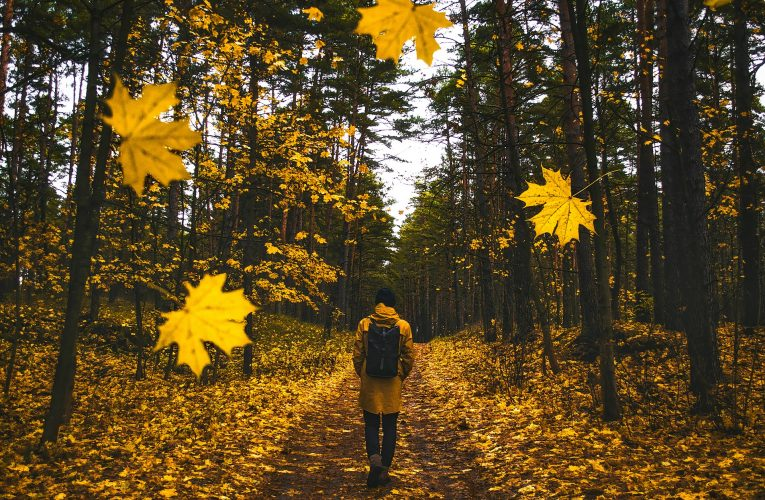 떨어지는 낙엽같은 탈모에 시름 깊어지는 가을