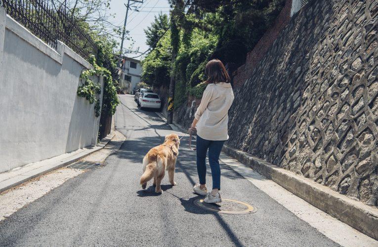 반려동물 보필에 '집사 골병', 관절 건강도 챙기는 방법은?